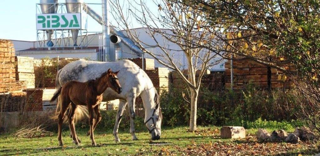 http://www.ribsa.com/wp-content/uploads/2015/11/ribsa_caballos-1023x500.jpg